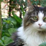 cat callout3